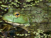 Click to Play Bullfrog Jigsaw Puzzle